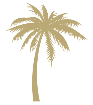 palmetto-bluff-palm